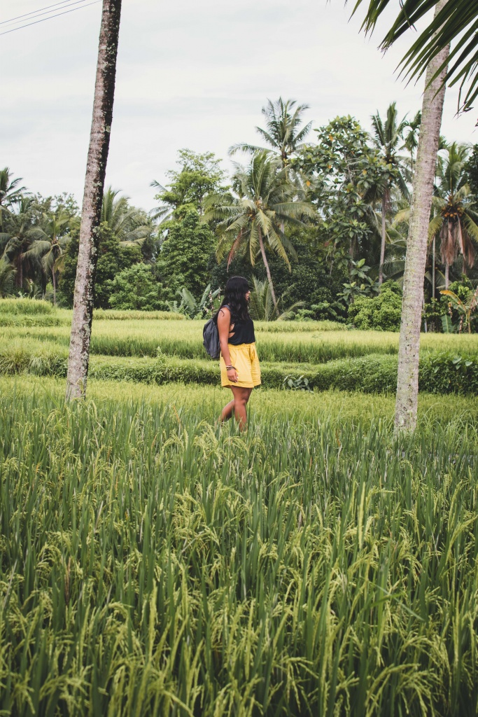 Ubud's rice fields