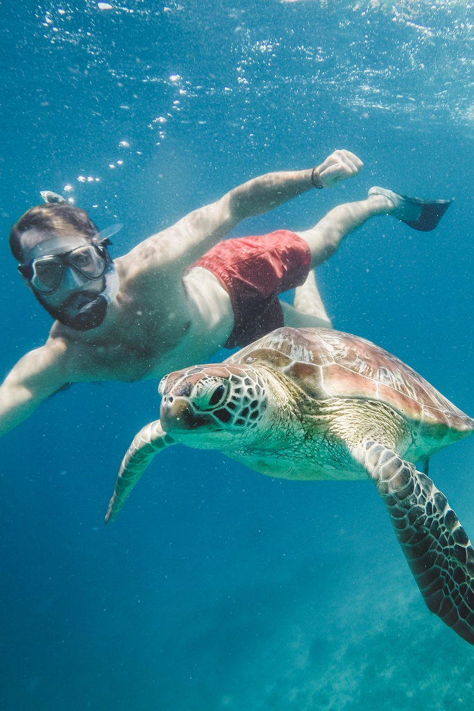 Snorkelling with turtles Gili Islands Indonesia