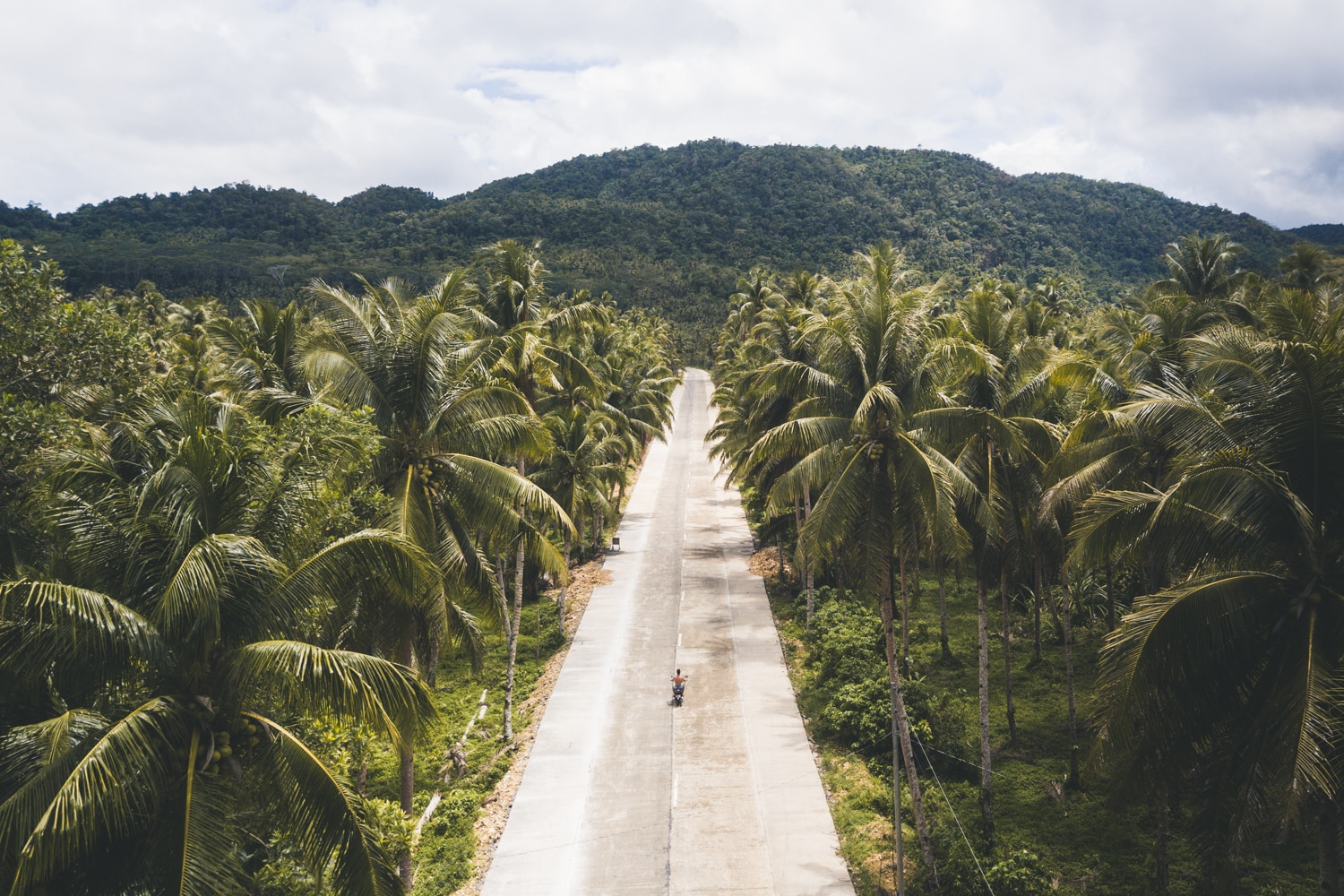 Palm tree island Siargao road