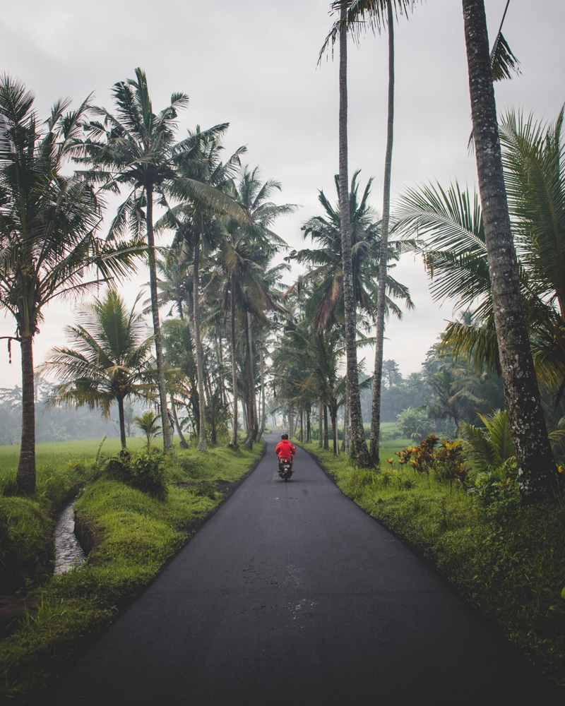 riding a scooter down a palm tree lined road in bali indonesia
