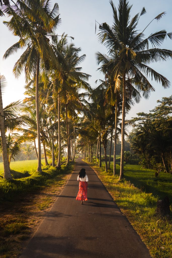 Road with palm trees near ubud bali indonesia