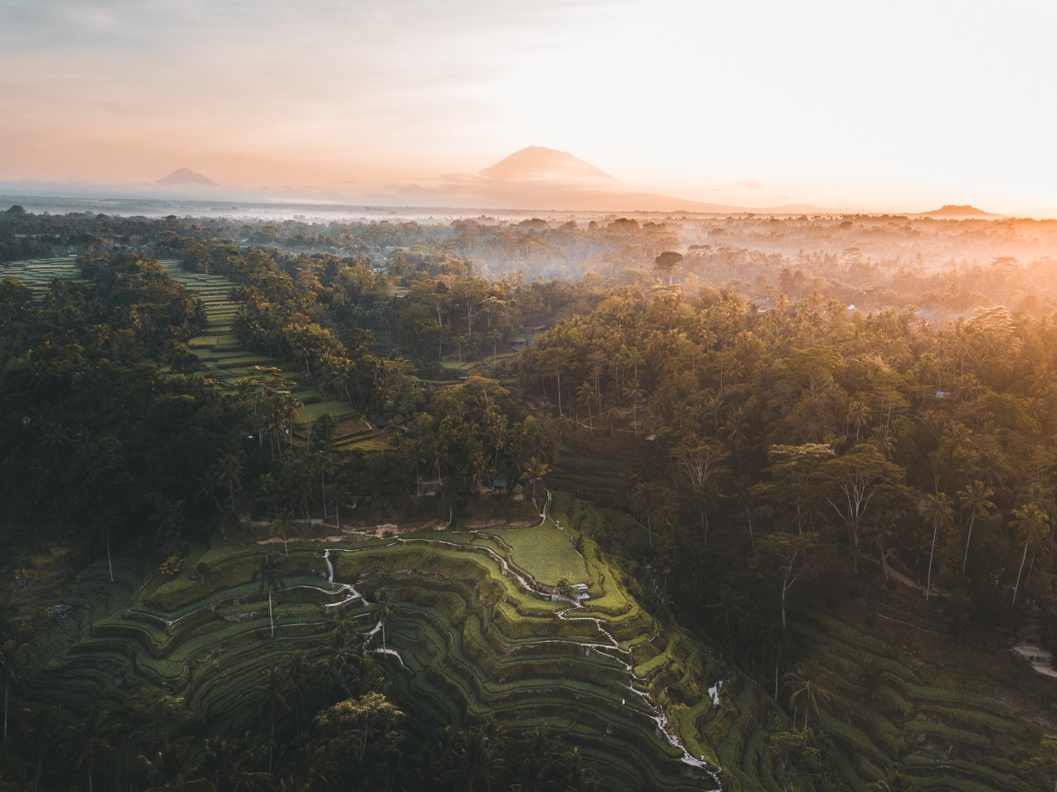 UBUD: 48H GUIDE FOR BUDGET TRAVELLERS