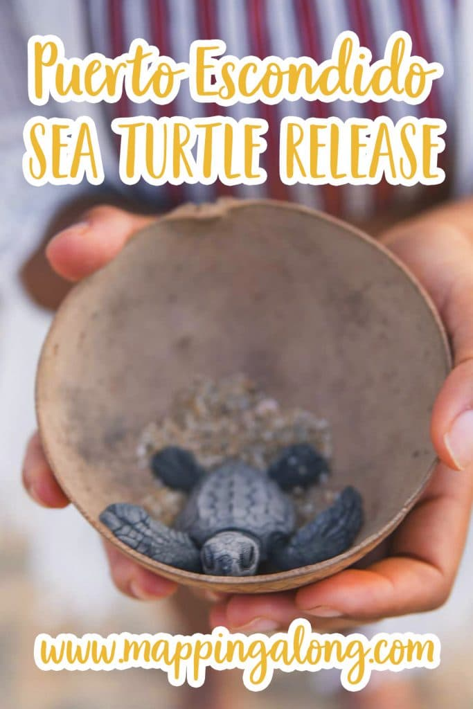 find out how to release sea turtles in puerto escondido